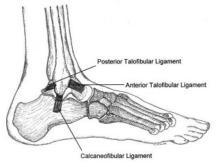 Ankle Ligaments Commonly Injured in an Ankle Sprain San Francisco Podiatrist Discusses Picture.jpg	Ankle Ligaments Commonly Injured in an Ankle Sprain San Francisco Podiatrist Discusses Picture