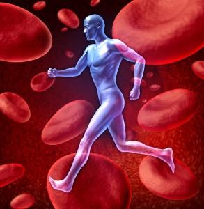 Human Circulatory Blood System