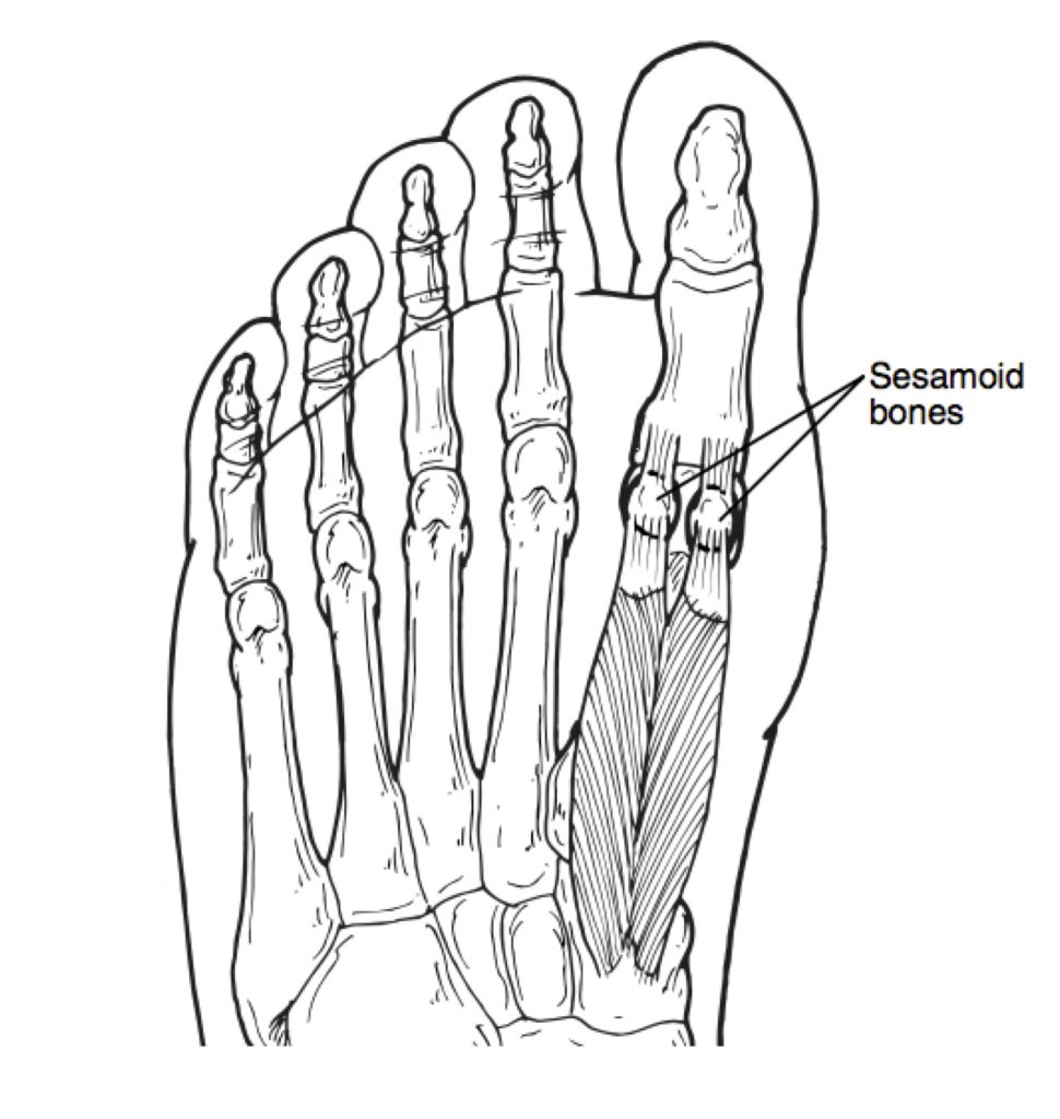 Sesamoid Stress Fractures May Be One Of The Very Worst Injuries Affecting Runners In Fact All Overtraining That Could Actually Seriously Put